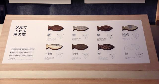 纏うさかな展から、魚種による質感や強度などの特徴を説明している。